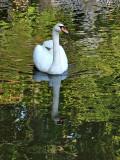 Lake Susan resident