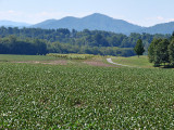 Biltmore farm