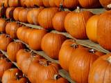 Halloween's on the way (Arlington, VA)
