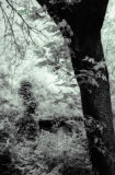 Trees, Ada Oklahoma