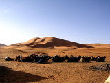 027 Erg Chebbi Dunes with camels.JPG