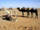 028 Erg Chebbi - Our waiting camels.JPG