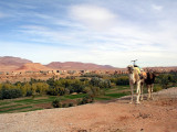 067 Enroute to T. Gorge - Landscape with camel.JPG