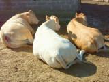 Les trois grasses
