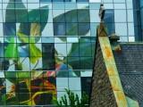 Les feuilles murales.