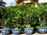 Les pots de fleurs