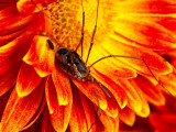 Blooms & bugs
