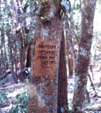 Propaganda tree 2