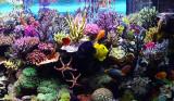 10th: aquarium