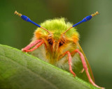 4th: spindle bug