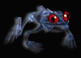 3rd: skeletal frog