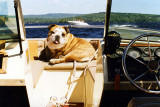 Cali boating on Lake Winnipesaukee