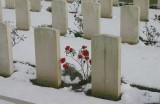 Flowers in the Snow.jpg