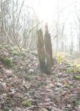 Shattered Tree.jpg
