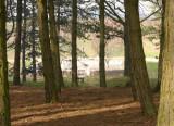 Sheffield Park.jpg