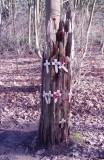 Tree at Ypres.JPG