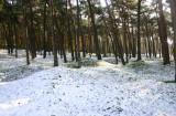 Vimy Snow.jpg