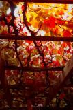 autumnal glory vine