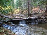 Forest Creek In Upper Entiat Valley