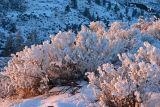 Last Light Of Day On Snowy Sage