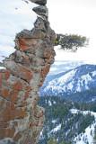 Lonely Tree Growing On  Peak Of Death