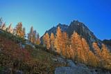 Morning Light Through The Larch Near Colchuck Pass