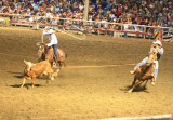 Team Roping At Stampede Rodeo ( Shot At ISO 3200)