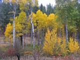 Fall Colors Along  Mud Creek