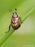 Beetle01c2998.jpg