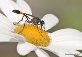 Wasp06c5906.jpg