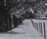 Pine Road Landscape