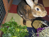 Justin Having More Salad At Alameda Point Bunny Rescue