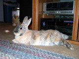 One Very Relaxed Bunny