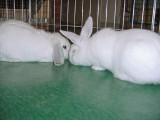 Steve & Deborah Beal Bunnies