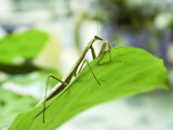 Mantis 2 July