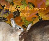 Pet Bunny Halloween 2007