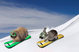 Downhill Racers