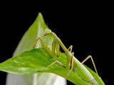 Mantis9Oct07_1700.jpg