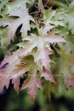 leaves94.jpg