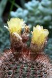 cactus99.jpg