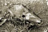 skull90.jpg