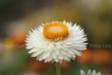 Flower07b.JPG