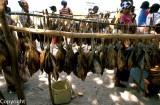 Fish catch on Atauro