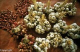 Garlic cloves, Maubisse market