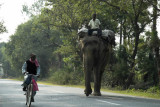 Elephant on the highway