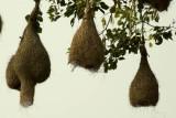 Hanging Nests