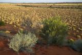 Spinifex country near Windorah