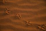 Tracks in the dunes outside Windorah