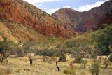 Hiking Ormiston Pound, on the Larapinta Trail