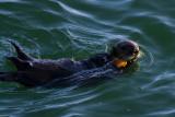 Warf Otter I.jpg